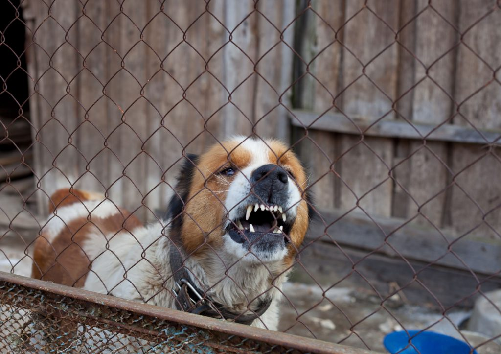 aggressive furious dog in cage, moscow watchdog