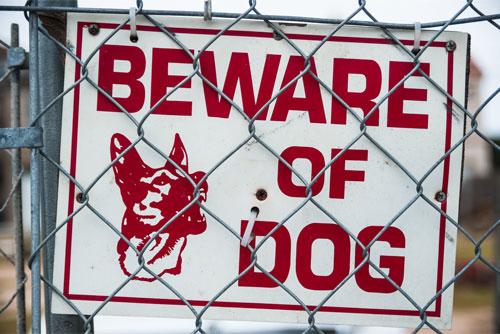 John P. Burns, personal injury lawyer, represents dog bite victims